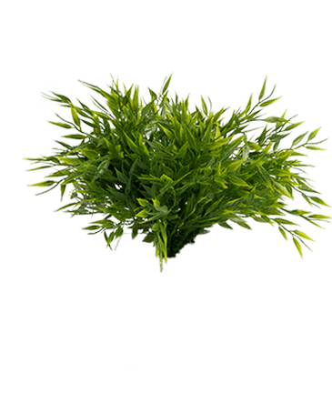 de bladeren van een kunst grasplant zonder pot