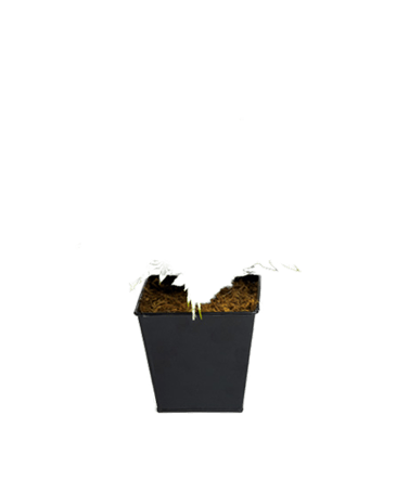 de zwarte pot van een kunstplant