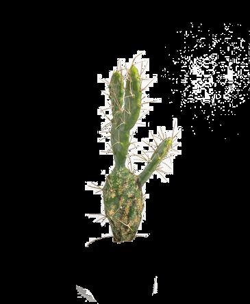 een kunst cactus met stekels zonder pot