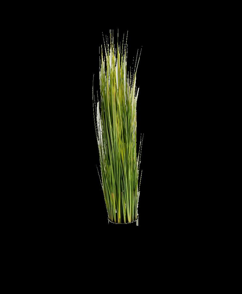 het siergras van een kunst grasplant