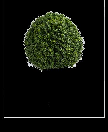 de bol van een kunst buxus bol