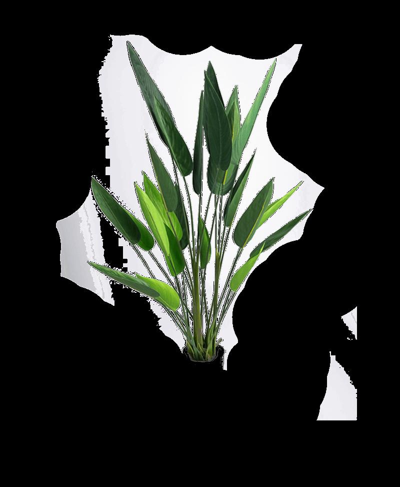 de bladeren van een heliconia kunstplant zonder pot