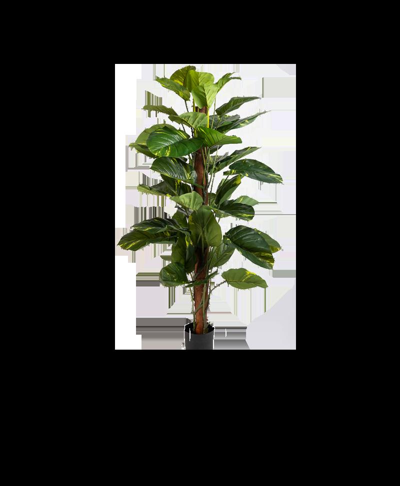 het bladerendak van een klimop plant