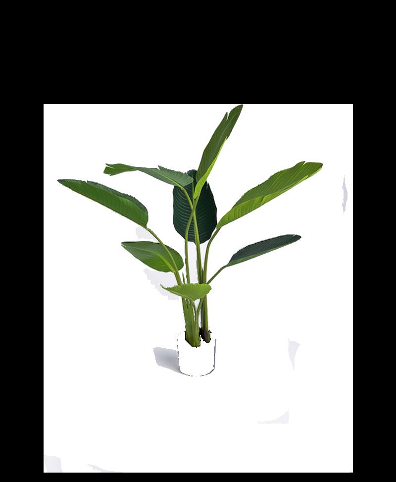 de bladeren van een kunstplant strelitzia