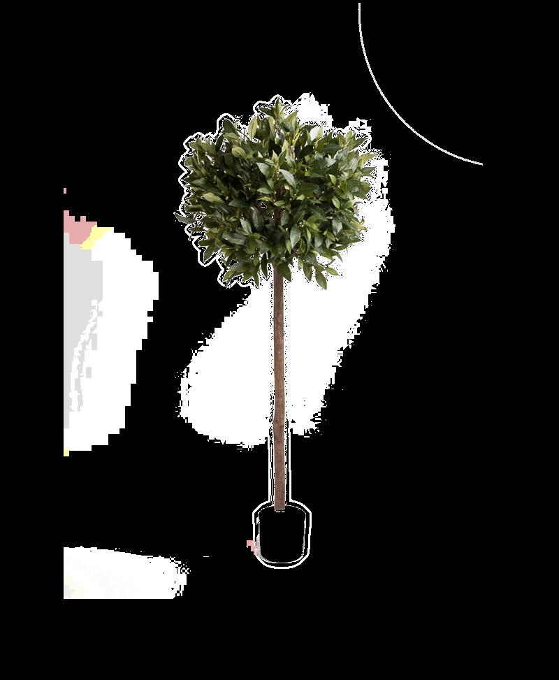 kunst laurierboom ingezoomd zonder pot