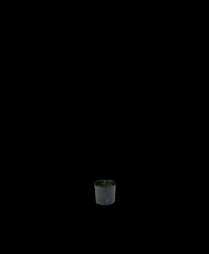 zwarte pot van een kunstplant