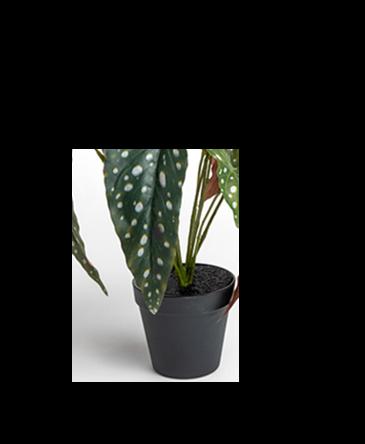 Zwarte pot Mascha