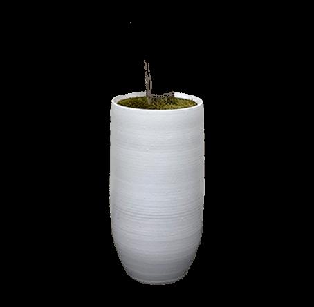 Witte pot jasmijn